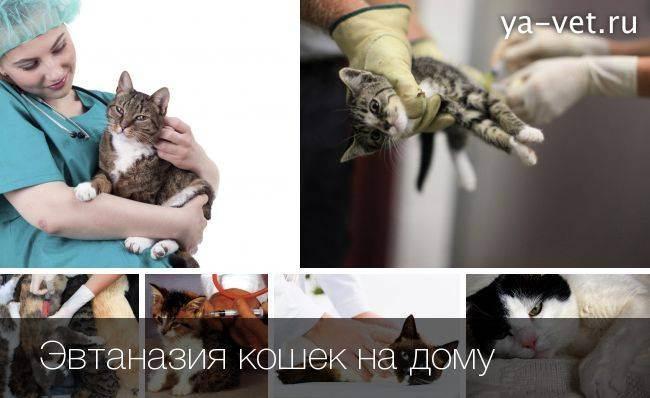 Как усыпить кошку, правила проведения процедуры, предостережения