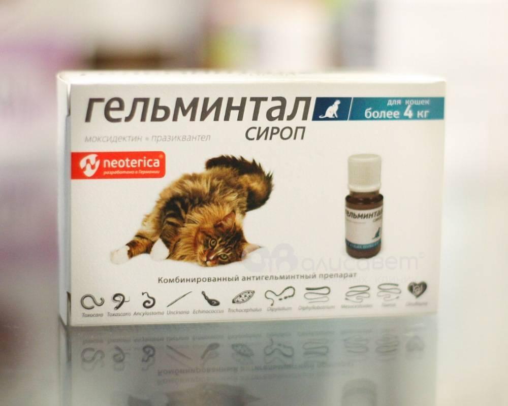 За сколько дней до прививки собаке давать глистогонное?
