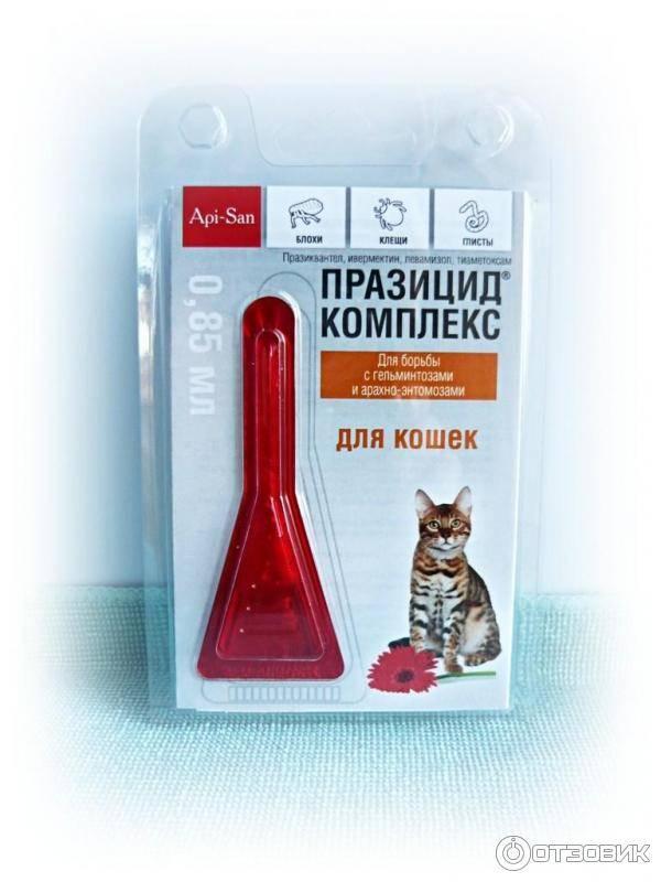 Капли от блох и глистов для кошек: особенности и применение