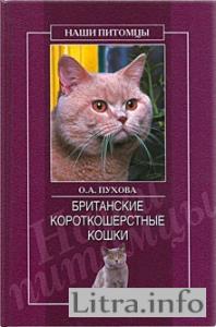 Класс котенка: что такое шоу-, брид-, пэт- класс?
