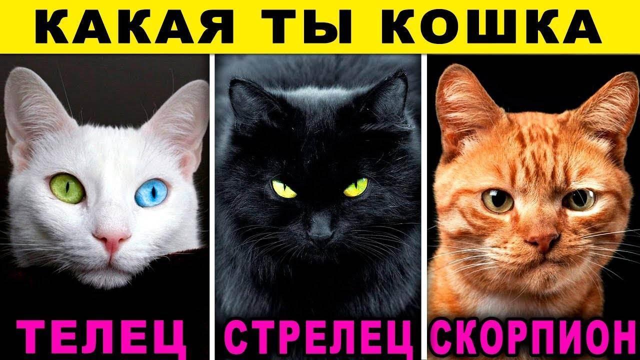 Рак – кот (кролик)
