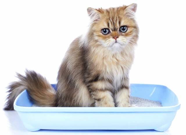 Мочекаменная болезнь у кошек: признаки, лечение и профилактика