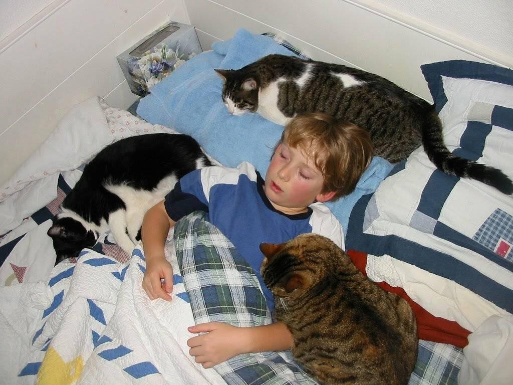 Кошки лечат людей как кошки лечат людей