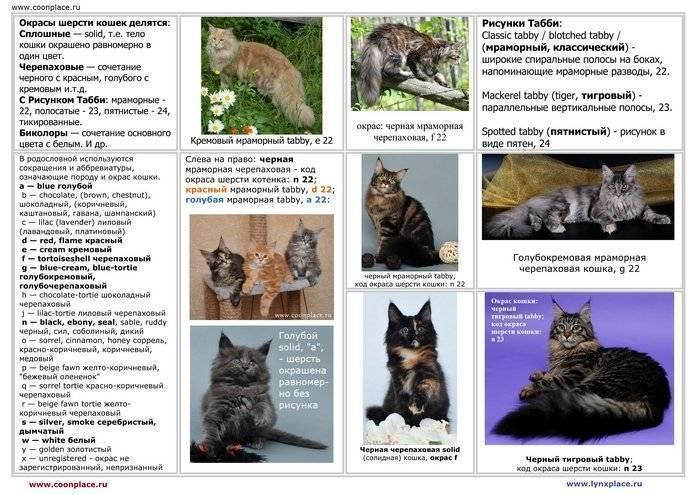 20 пород кошек с окрасом табби
