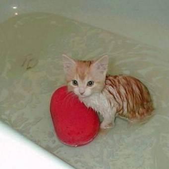 Как купать котенка - wikihow