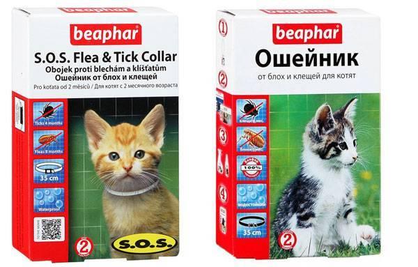 Ошейник от блох и клещей для кошек и котов | отзывы, цена, как действует