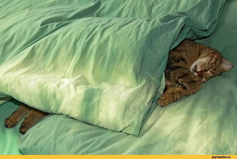 Видят ли кошки сны?