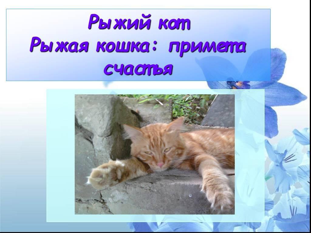 Рыжий кот: приметы – в доме, к чему перебежал дорогу, найти котенка