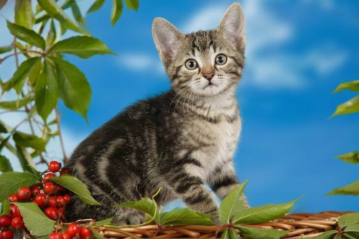 Где оставить кошку на время отпуска: варианты и важные советы