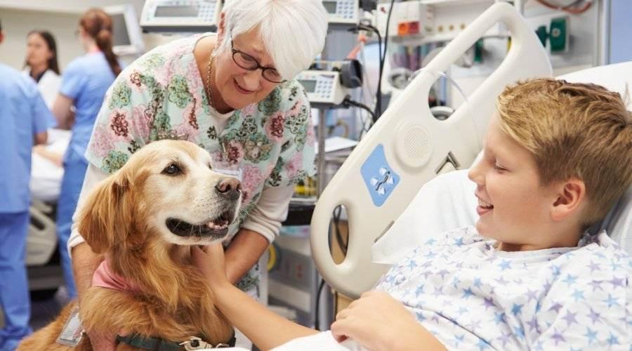 Анималотерапия: 6 видов лечения с помощью животных