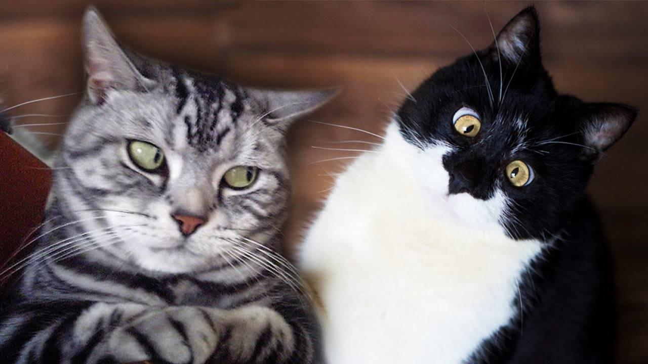 Тайна кошачего взгляда: почему нельзя смотреть кошке в глаза