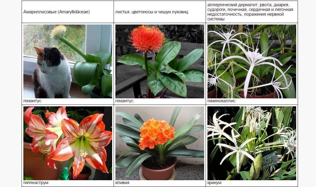 Какие цветы нельзя держать дома: фото и названия, каталог опасных комнатных растений