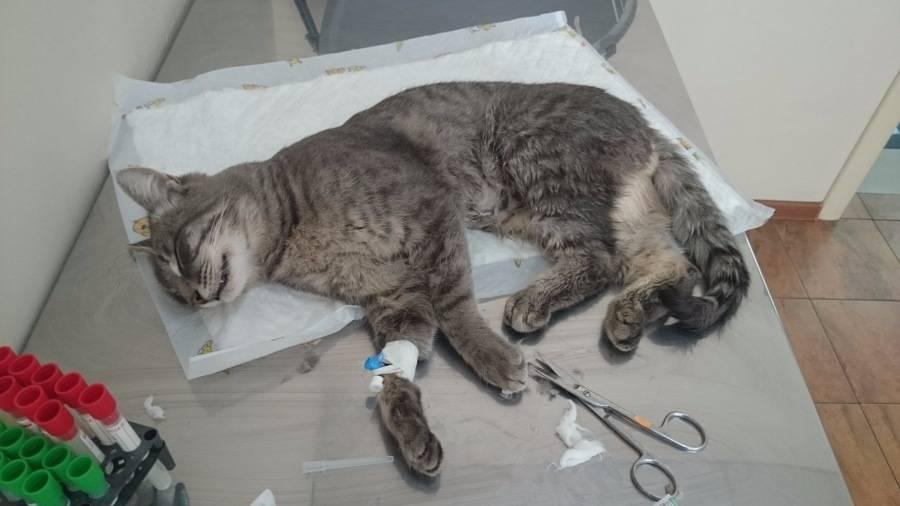 Где усыпить кота в москве, усыпить кошку цена