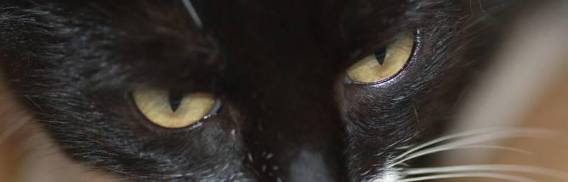 Что будет, если коту обрезать усы - почему нельзя обрезать