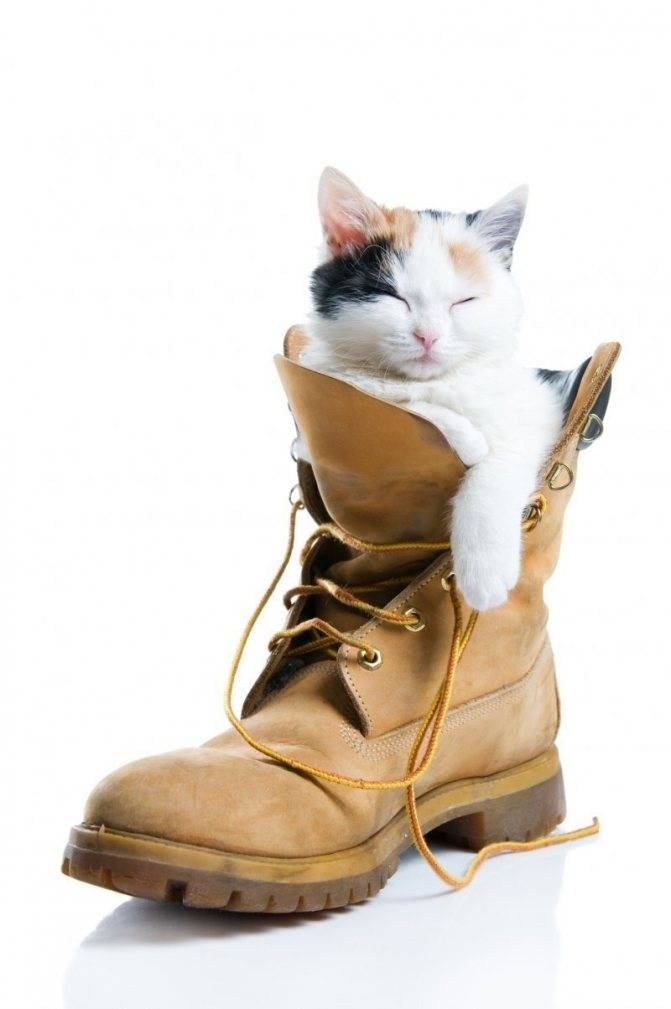 Кошки сидят в коробках и грызут пакеты – основные причины такого поведения