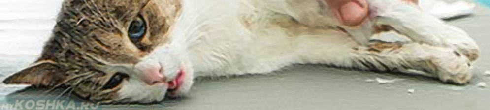 Влажный перитонит у кошек лечение - муркин дом