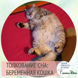 Сонник беременная кошка родила котенка. к чему снится беременная кошка родила котенка видеть во сне - сонник дома солнца