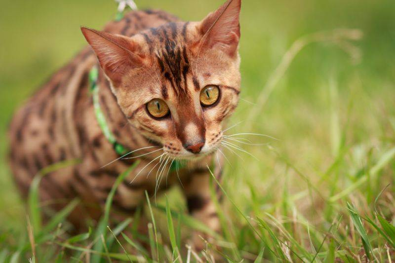 Кошка на природе: правила безопасности