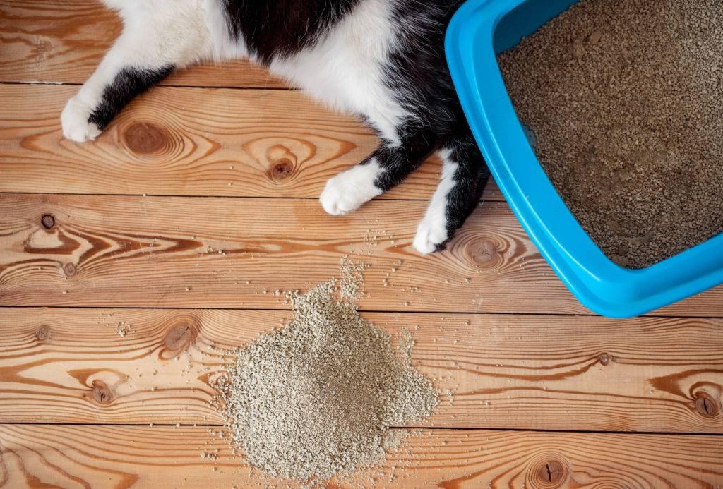 Как отучить кошку писать в неположенном месте