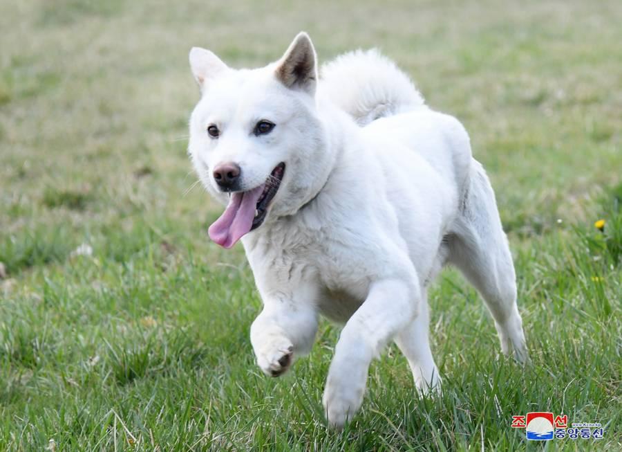 Японские породы собак: особенности характера и экстерьера