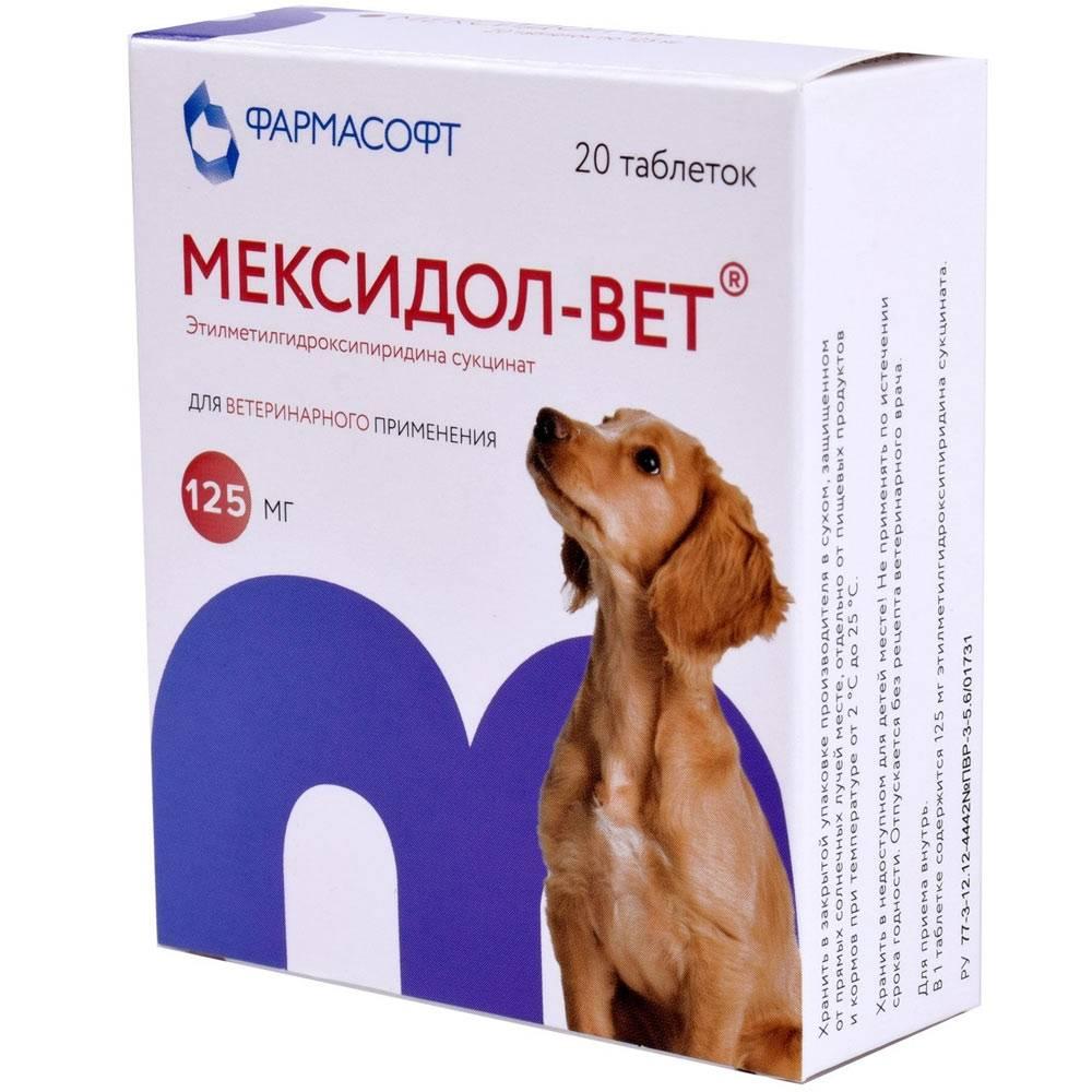 Мексидол-вет: инструкция по применению для кошек, показания и противопоказания, аналоги, отзывы