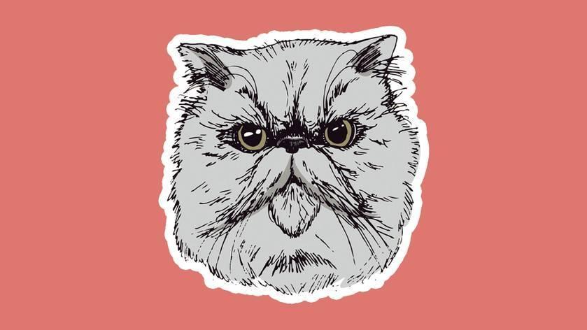 Агрессия у кошек: разбираемся в причинах и способах устранения