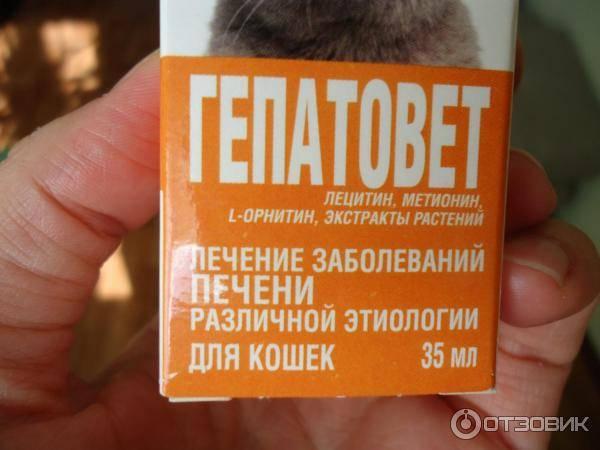 Гепатовет для собак: инструкция по применению, отзывы ветеринаров