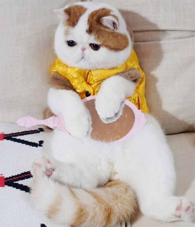 Пиксибоб: 10 фото, цена котенка, описание породы, характер и стандарт