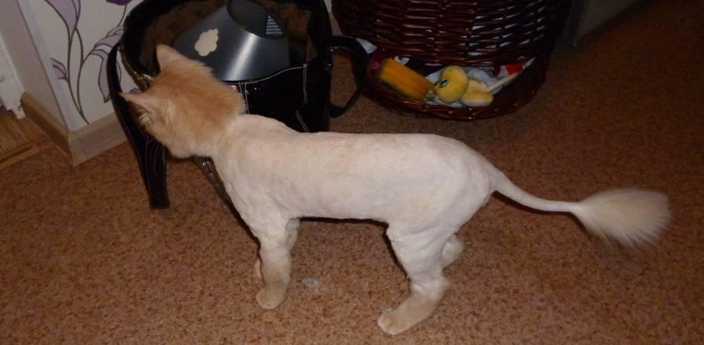 Как успокоить кота чтобы подстричь шерсть