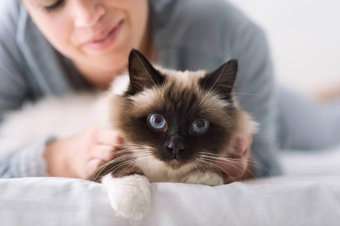 Порода кошек, подходящая вам по знаку зодиака.