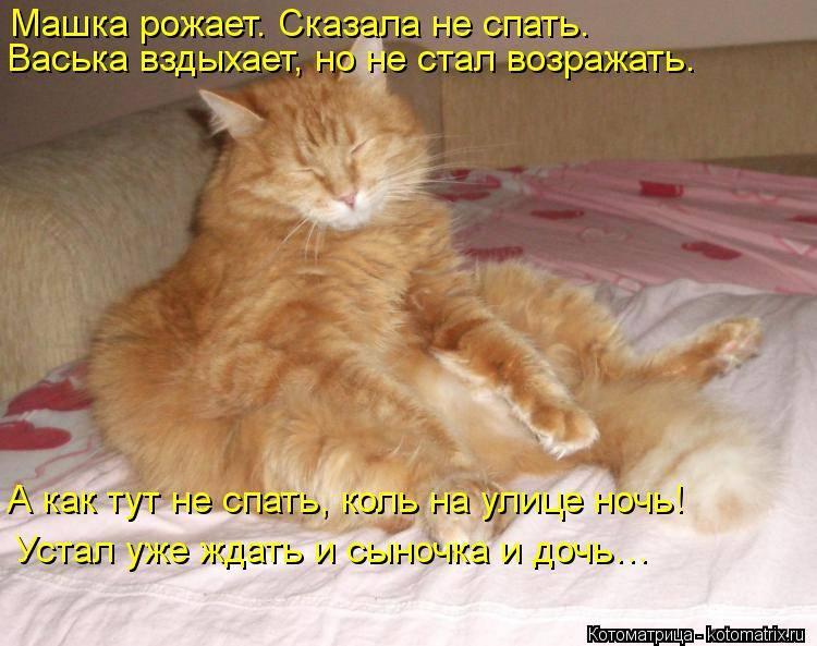 Как приучить кошку спать по ночам? - усатый-полосатый - медиаплатформа миртесен