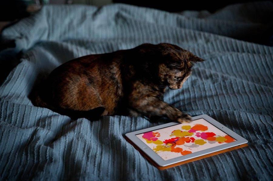 """Как приучить кота спать ночами и в утренние часы?   блог ветклиники """"беланта"""""""
