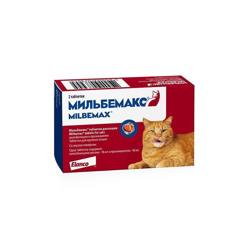 Мильбемакс для кошек: отзывы, инструкция по применению, противопоказания