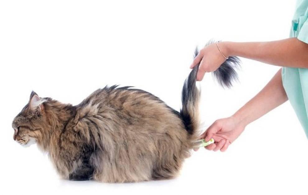 Почему у кошки выпадает шерсть на животе и между задними лапами, в чем причина образования залысин?