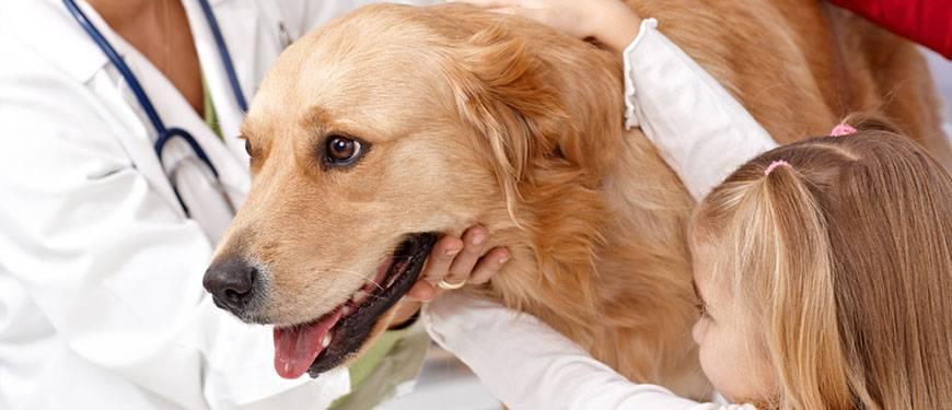 Можно ли вылечить дирофиляриоз у собак. что делать если у вашей собаки дирофиляриоз? географическое распространение дирофилярий