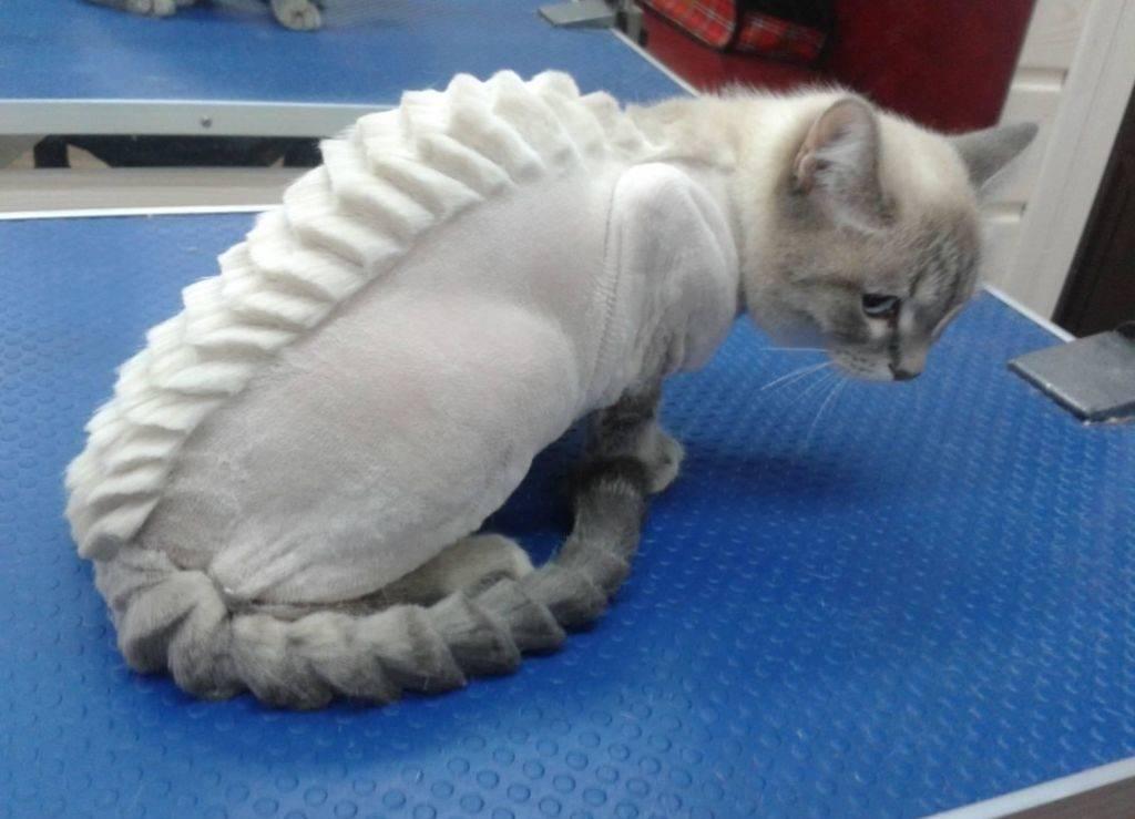 Как подстричь и побрить кота: полная инструкция