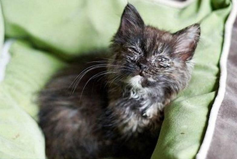 Кошка простыла и чихает: причины и лечение, что делать, если кот простудился, как лечить?
