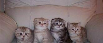 Тонкости и нюансы, как подстричь когти кошке