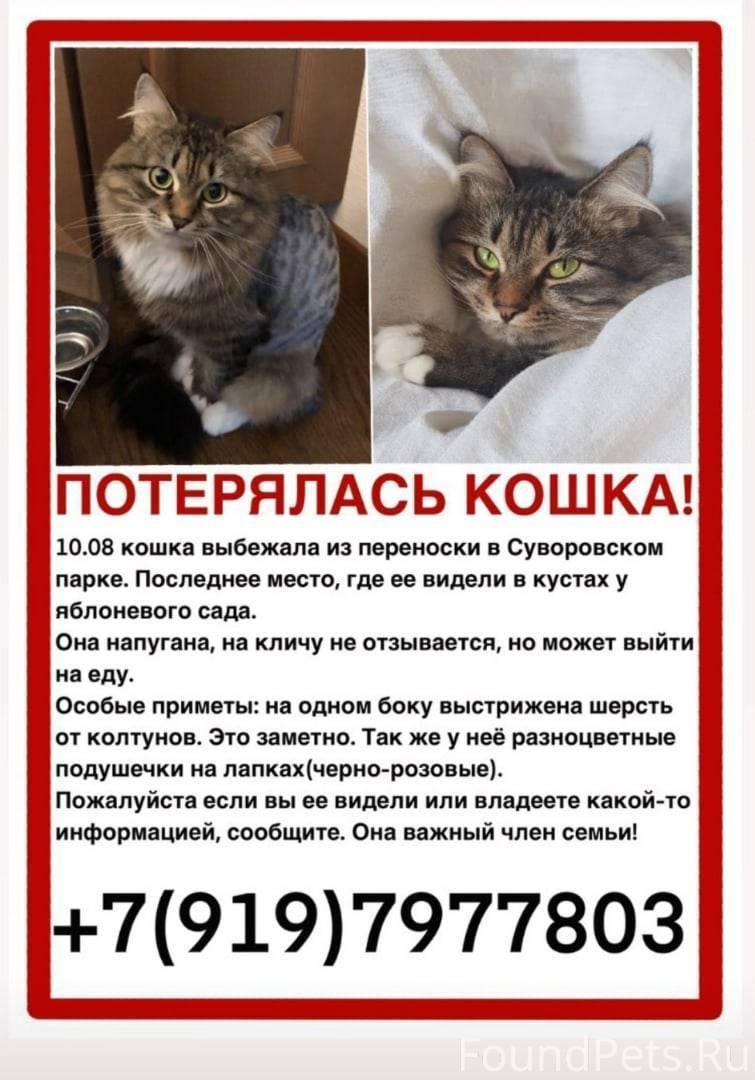 Кот ушел из дома: когда он вернется обратно, почему кошки убегают и не возвращаются, как их вернуть?
