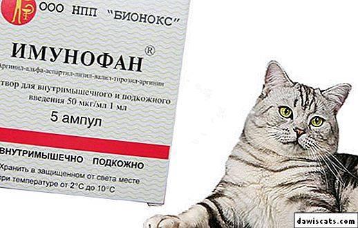 Имунофан для кошек: показания и инструкция по применению, отзывы, цена