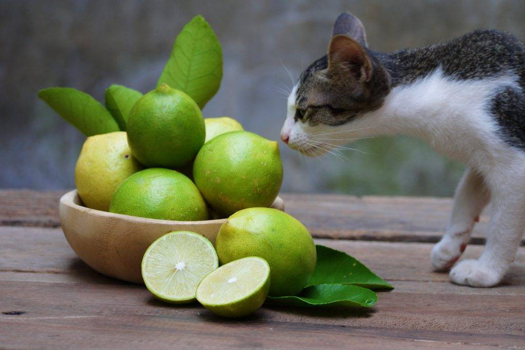 Отпугивающие запахи, которые не любят кошки