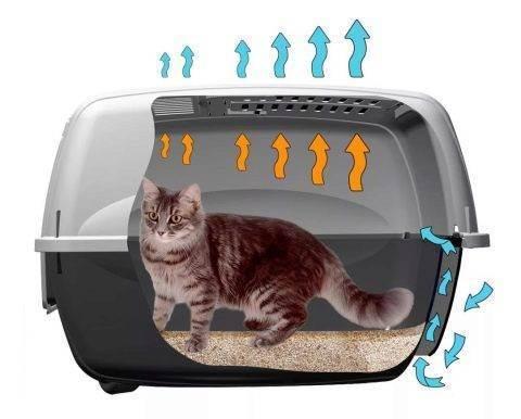 Какой лоток лучше для кошки?