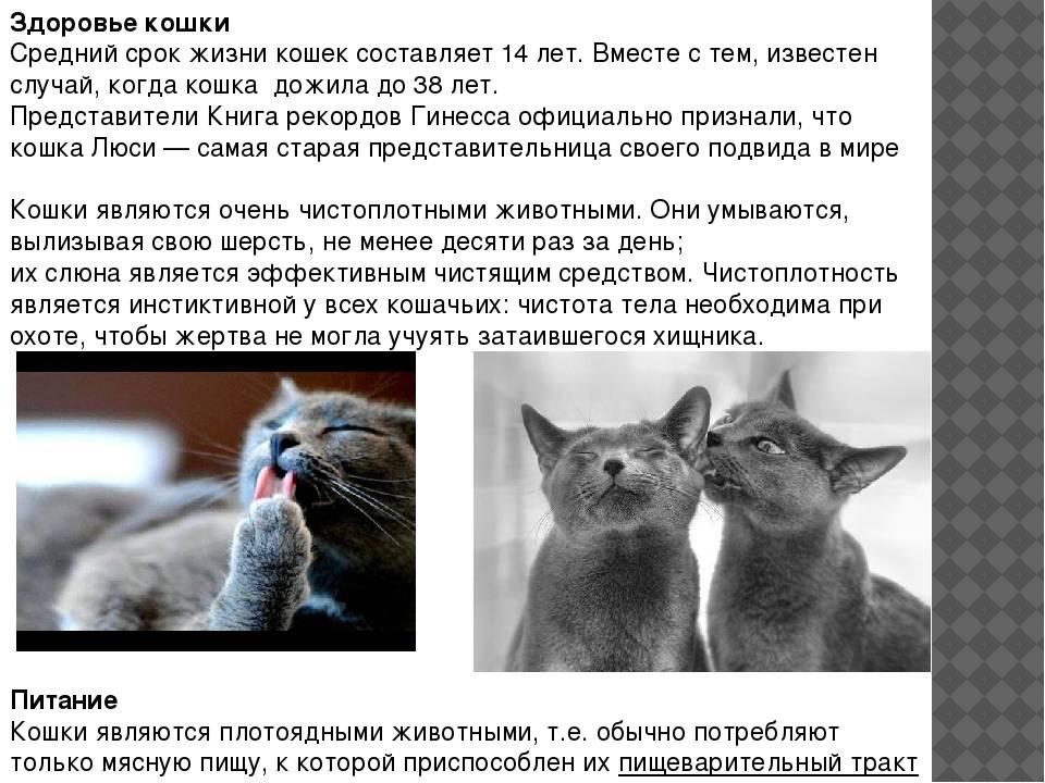 Сколько лет живут кошки: средняя продолжительность жизни