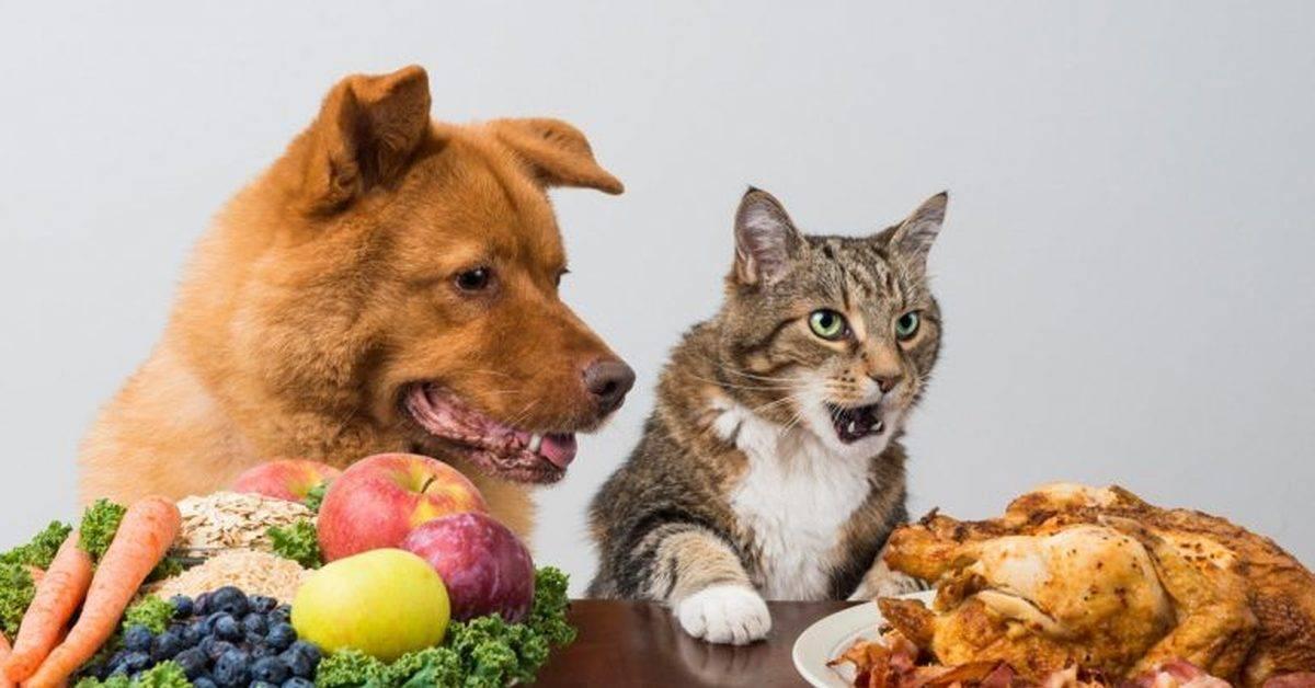 Можно ли давать кошке собачий корм: почему нельзя кормить, как отличается состав, вред и польза, мнение ветеринаров