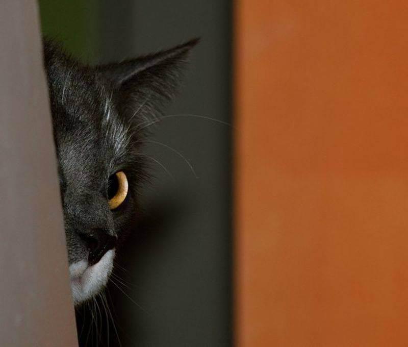 Стресс у кошки: причины, как бороться, профилактика