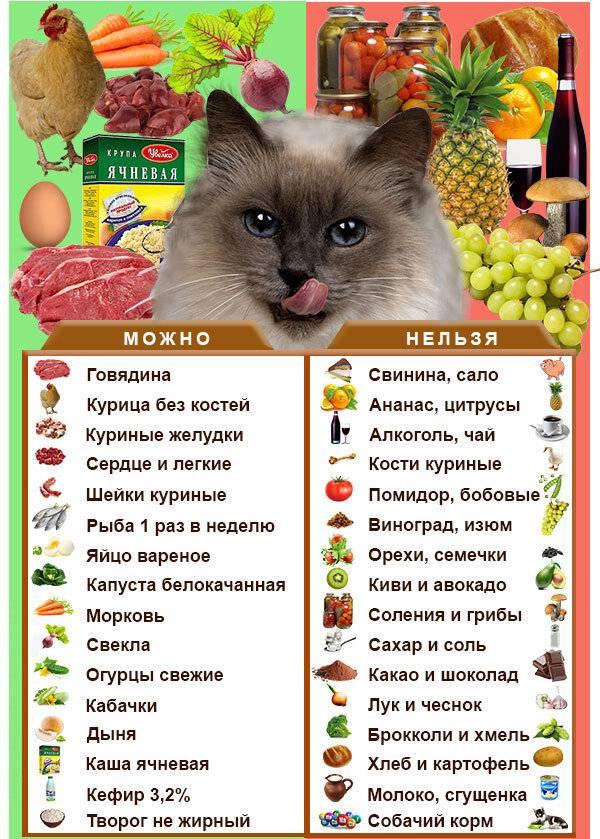 Чем лучше кормить кота: натуралкой или сухим кормом?