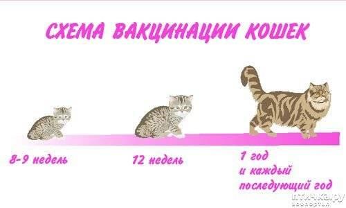 С какого возраста делать прививки котенку?
