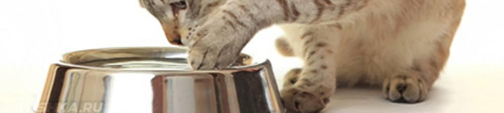 Почему кошки закапывают еду? зачем коты зарывают корм рядом с миской с водой после того, как поели? почему коты делают это каждый раз?