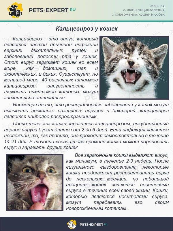Панлейкопения у кошек, первичные симптомы и патогенезветлечебница рос-вет