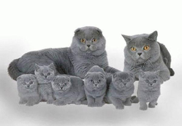 Как приучить взрослую кошку или кота к лотку